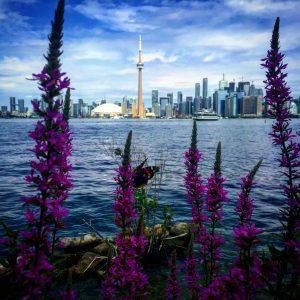 Toronto Centre Park