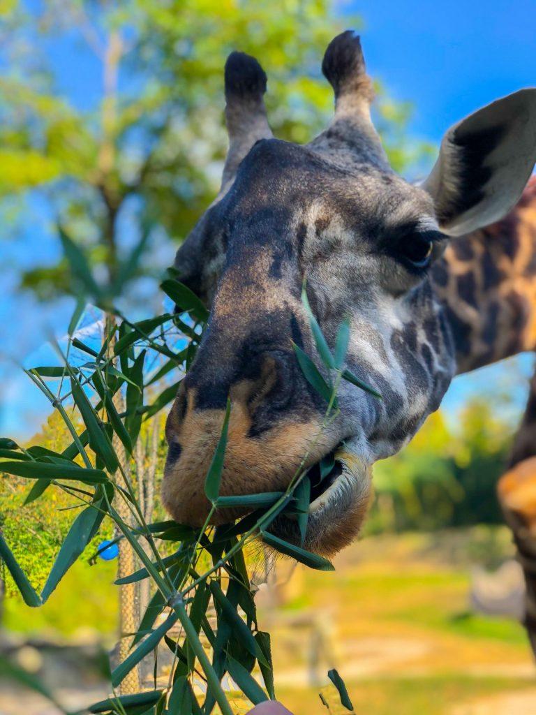 Cincinnati Zoo Experiences