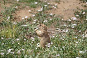 Rocky Mountain Arsenal wildlife