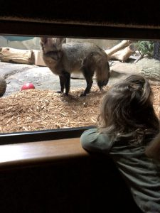 Discovery Zoo at the Boonshoft Museum of Discovery