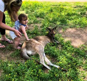 Petting Kangaroos At Kentucky Down Under