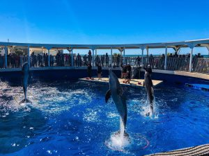 Gulfarium: Destin Florida with Kids