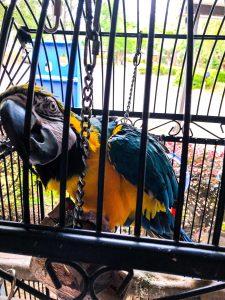 Animal Encounters in Destin Florida