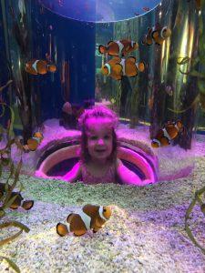 Ripley's Aquarium In Gatlinburg