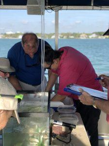 Sorting Out The Sea Life: Sarasota Bay Explorers