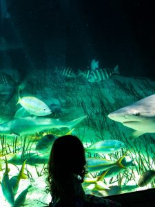 Mote Aquarium: Fun Things To Do With Kids in Sarasota