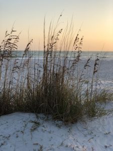 The Perfect Itinerary For A Great Day In Sarasota