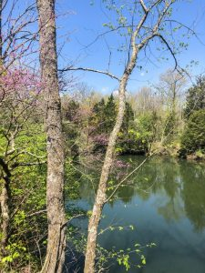 Fallsville Wildlife Area