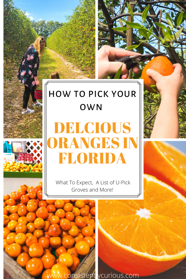 pick your own oranges in florida