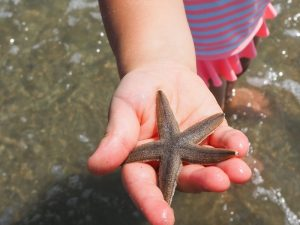 Starfish in Garden City, SC