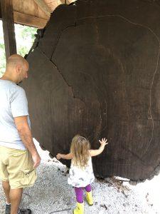 Redwood Slice In Cincinnati OH