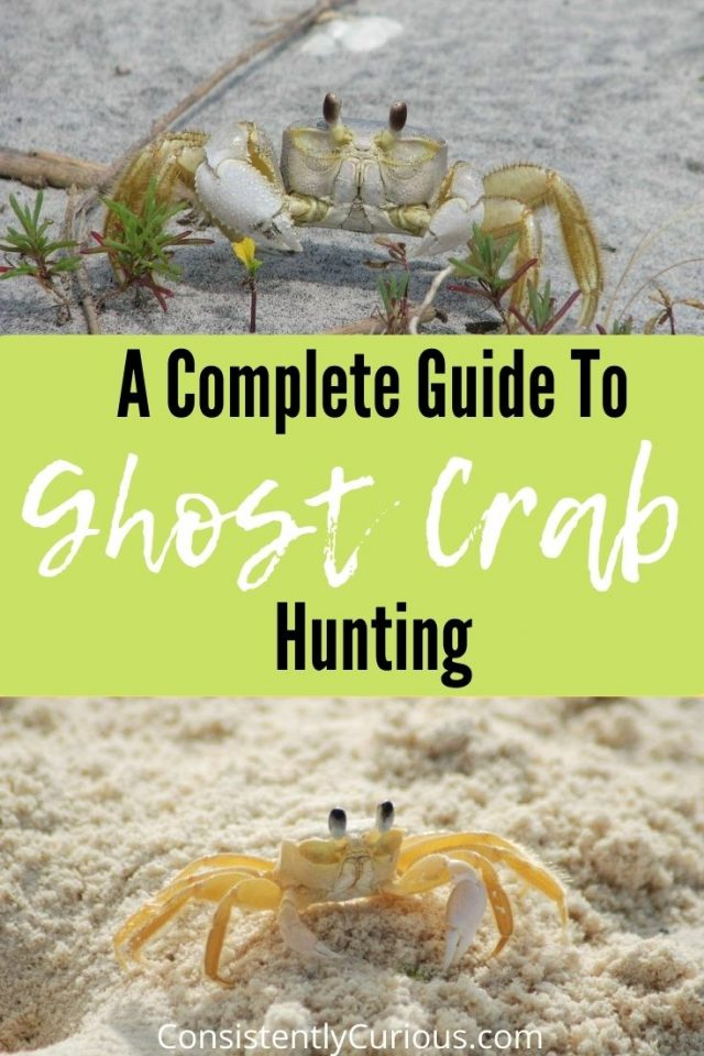 Guide To Ghost Crab Hunting