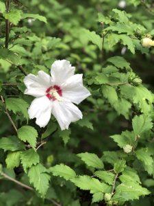 Rowe Arboretum
