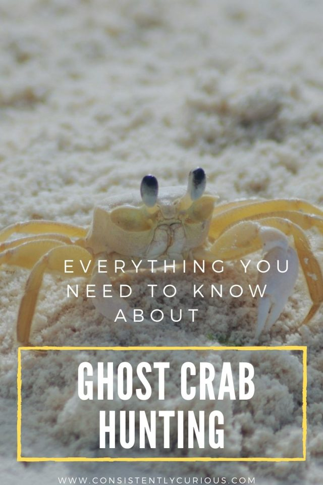 A complete guide to ghost crab hunting