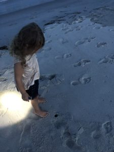 What You Will Find On The Beach At Night