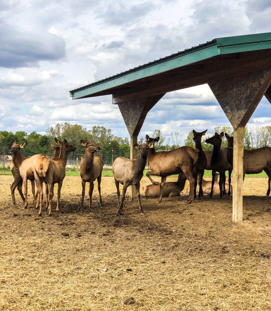 Quiet Harmony Elk Ranch