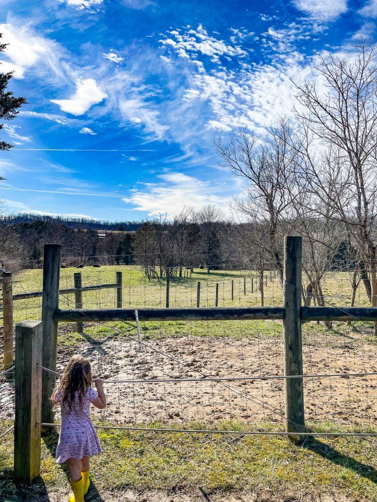 Bison Observation at Big Bone Lick State Park In Kentucky