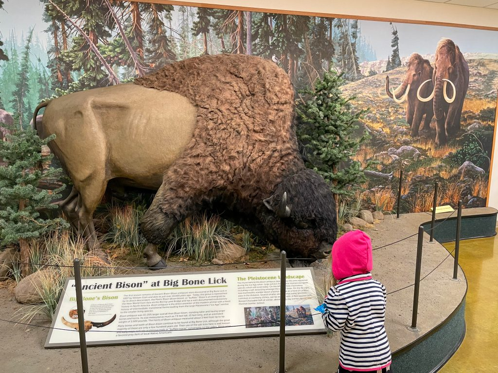 Ancient Bison At Big Bone Lick