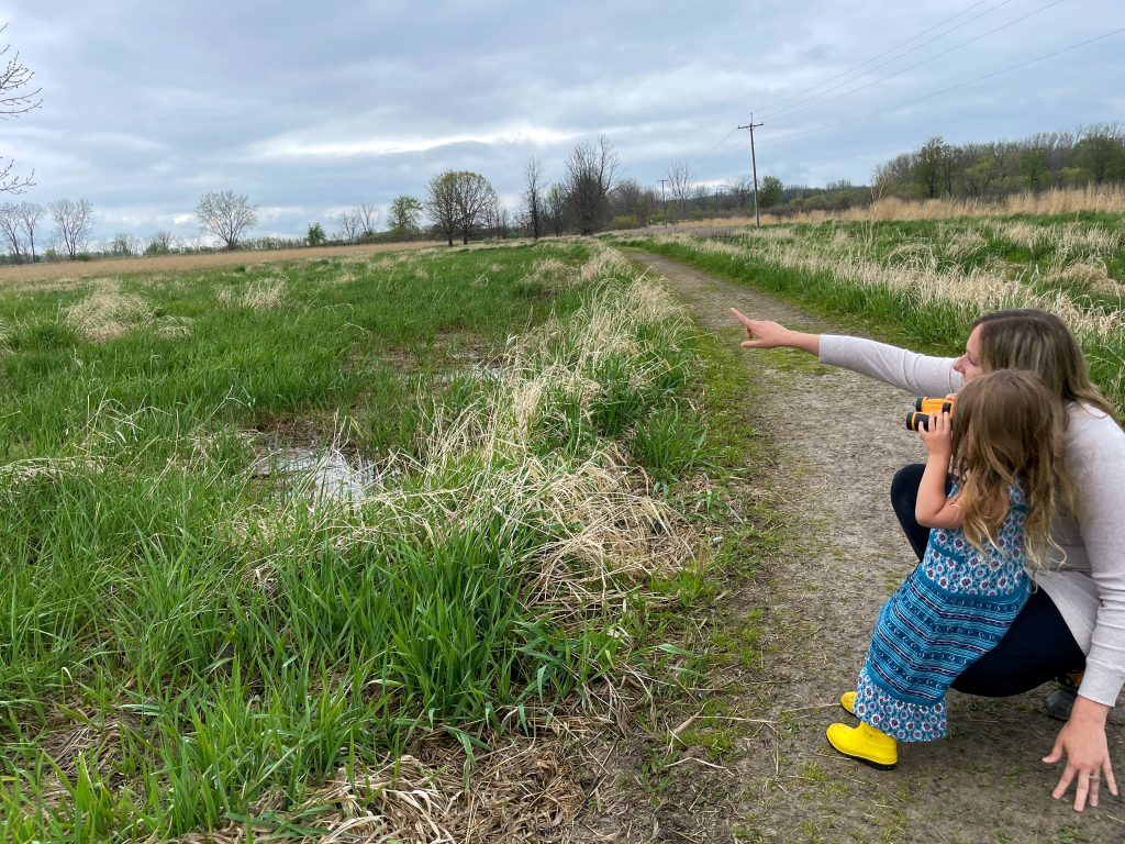 Birding in Shiawassee National Wildlife Refuge