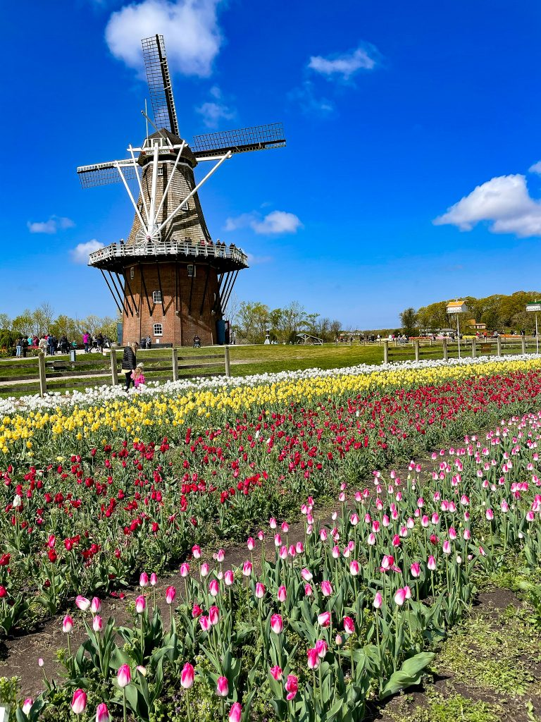 Tulip Time Festival In Holland Michigan