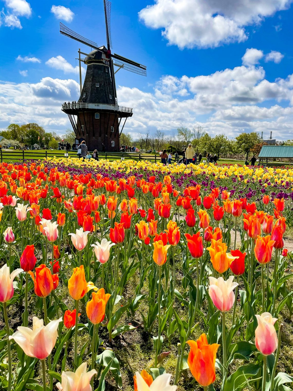Things to do in Holland During The Tulip Time Festival