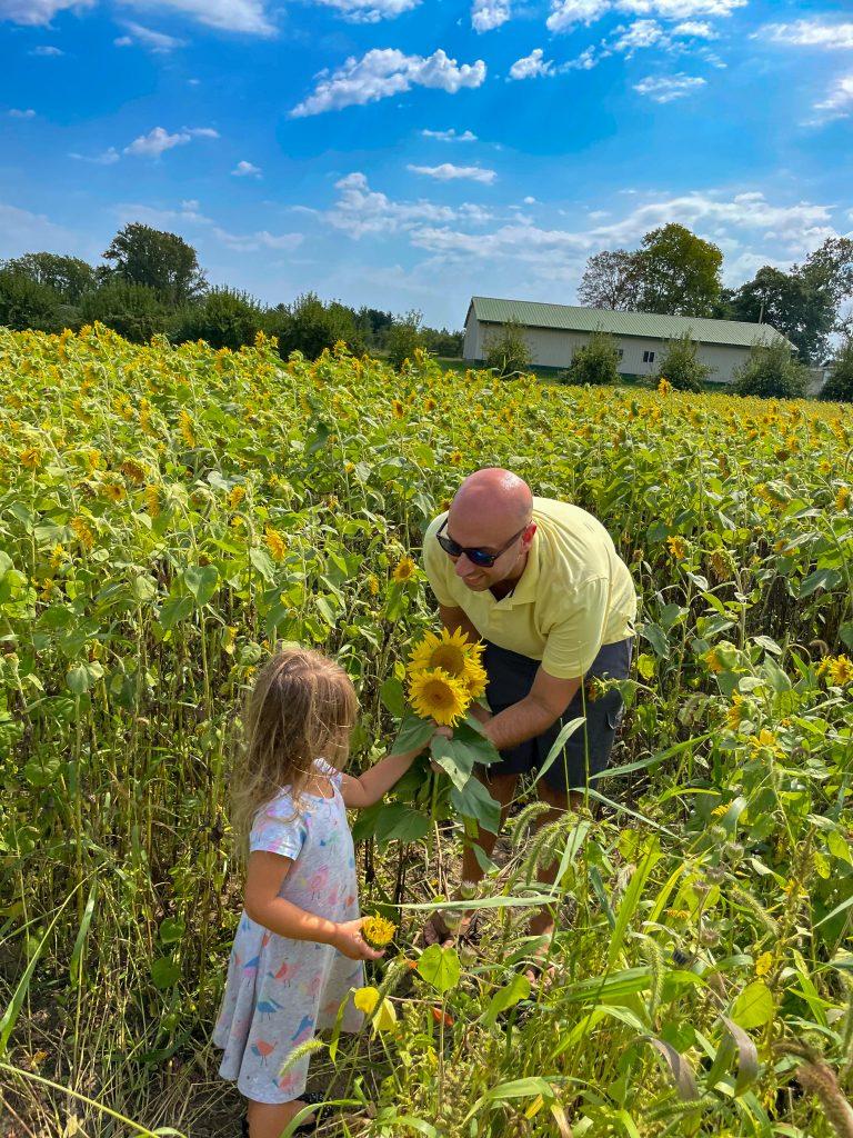 sunflower field at Cherry Hawk Farm